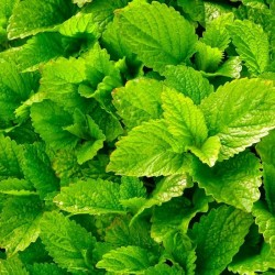 LEMON BALM / MELISSA DRIED...